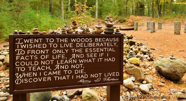 Henry Thoreau in the 21st Century
