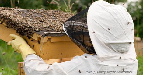 The Accidental Beekeeper