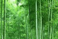 bamboo textiles