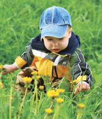 boy picking dandelions