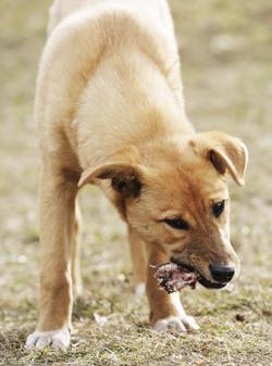 Feed Your Dog Raw, Meaty Bones