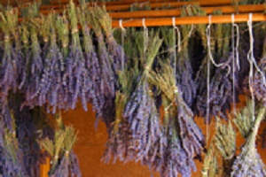 dried_lavender