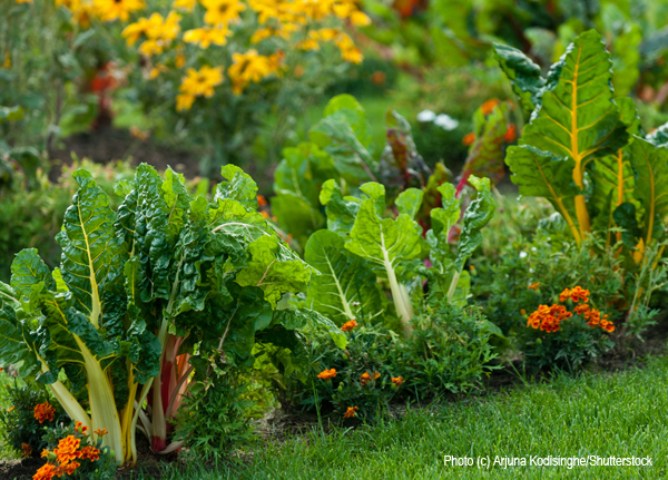 Create an edible landscape in your front yard garden.