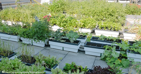 Green Roofs are Growing Food and Biodiversity