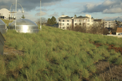 green roof library