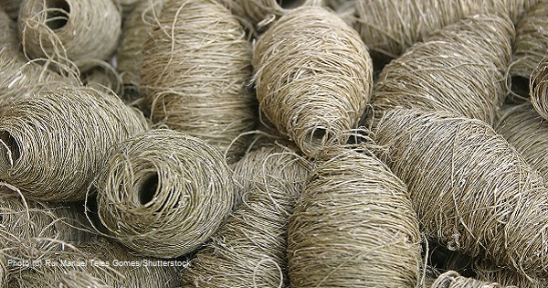 Hemp Fabric: The New, Old Fiber Makes a Comeback for Clothes and Home