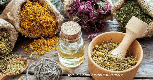 Herbal Health Certification - Knowledge Pathways International