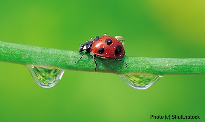 Luring beneficial insects to your garden
