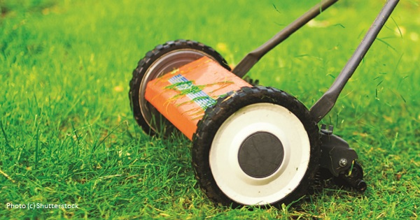 10 Steps to Pesticide-Free Lawn Care