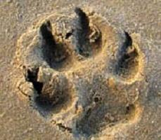 dog's eco footprint