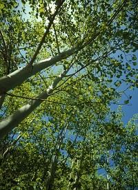 Communicating Trees
