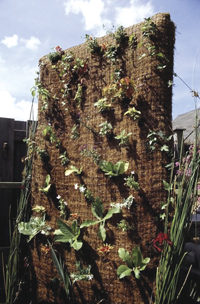 vertical garden coconut base before