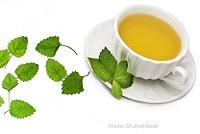wild-herb-tea