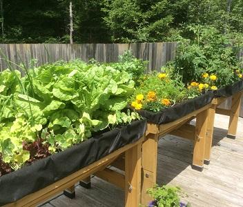 Plant a Food Garden